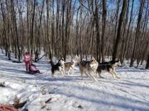 На лыжном стадионе «Зимний» прошли соревнования по  ездовому спорту